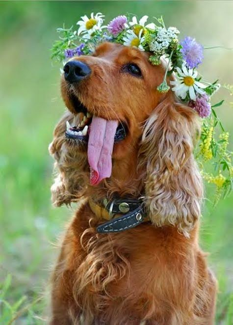 Aaah. Incorporate the dog!! But honestly I love the flower tiara. Lol