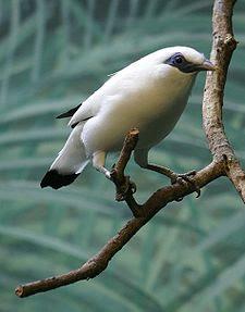 Menangkar burung dilindungi bisa dapat ijin