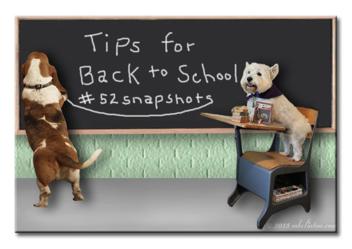 Basset Hound writing on chalkboard with Westie for a student