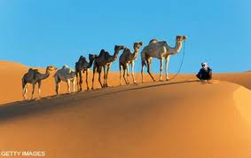 We kregen het hele woestijn-menu compleet met dromedaris fokkerijen als amuse.