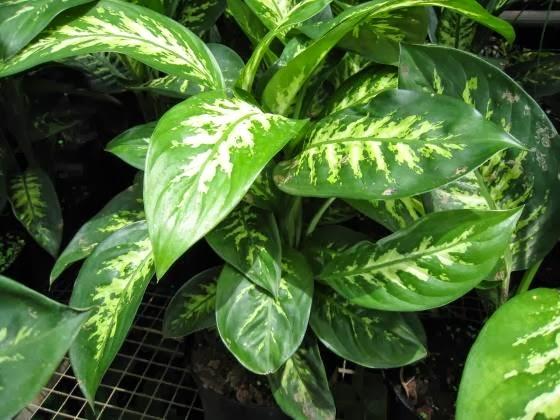 protostar liste des plantes toxiques. Black Bedroom Furniture Sets. Home Design Ideas