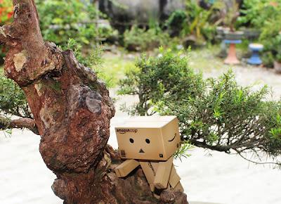 Danbo Tolong Manjat pohon