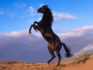 Black Horses, Black Horse Wallpapers for Desktop