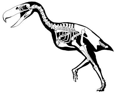 esqueleto de Kelenken