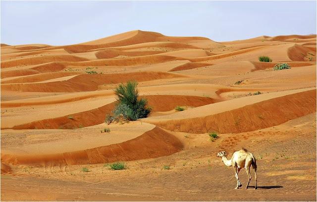 Piaskiem po oczach czyli wieje z nad pustyni