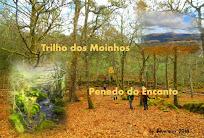 17/02/08 - Trilho dos Moinhos & Penedo do Encanto