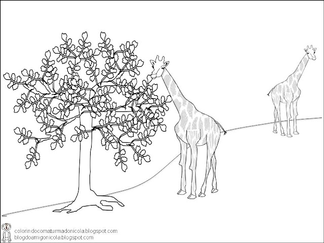 Imagem de uma Girafa para colorir Hello Kids - imagens para colorir girafa