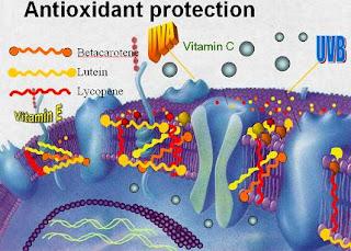 Vai trò chống oxy hóa của vitamin C.