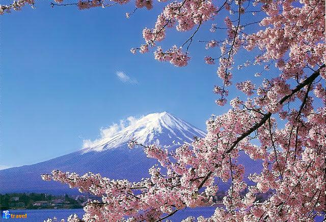 Праздник любования цветением сакуры