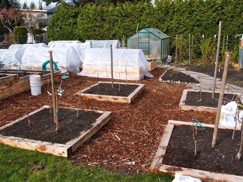 Backyard Orchard Culture: Designing Fruit Tree Quartets