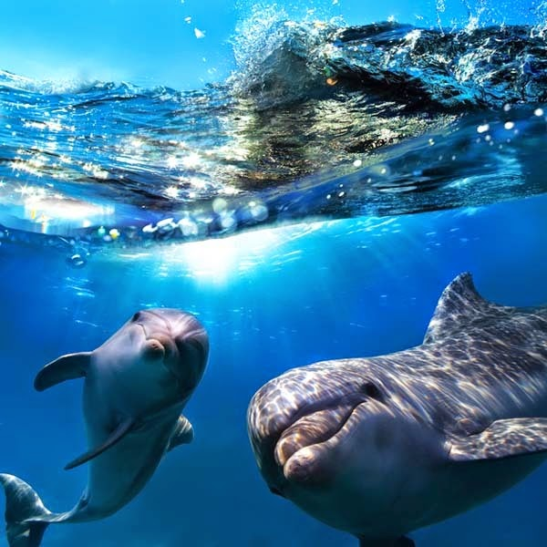 Here Are 24 Awesome Things You Didn't Know About Animals. #11 Just Made My Week. - Dolphins have names for each other and can call out for each other specifically