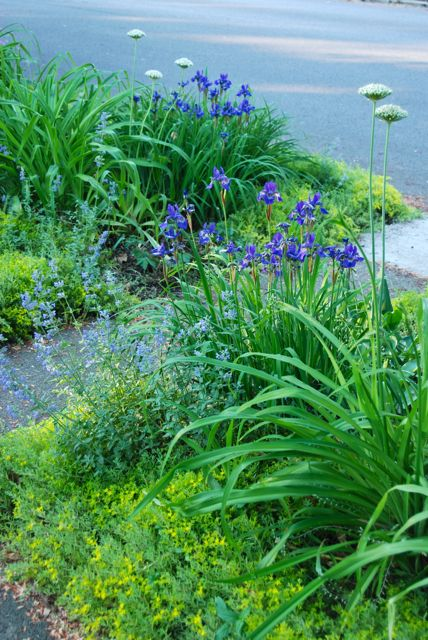 Our Front Woodland was entirely turf just a couple years ago.  Photo taken May 25th, 2012.