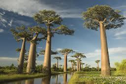 Cara Mengetahui Usia Pohon Dengan Mudah