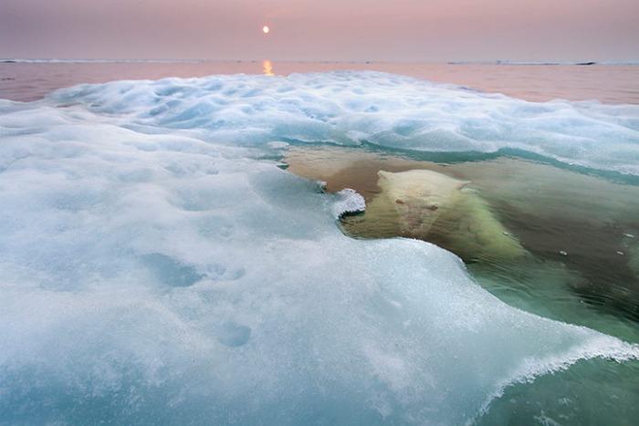 """Foto de Paul Sounders ganadora del Wildlife Photographer of the Year 2013 en la categoría de """"animales en su hábitat"""""""