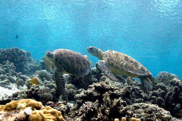 wisata taman laut di pulau maratua