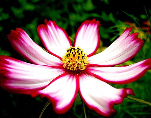 Abbey 39 s computer graphic projects flower stamp - Fotos de flores bonitas ...