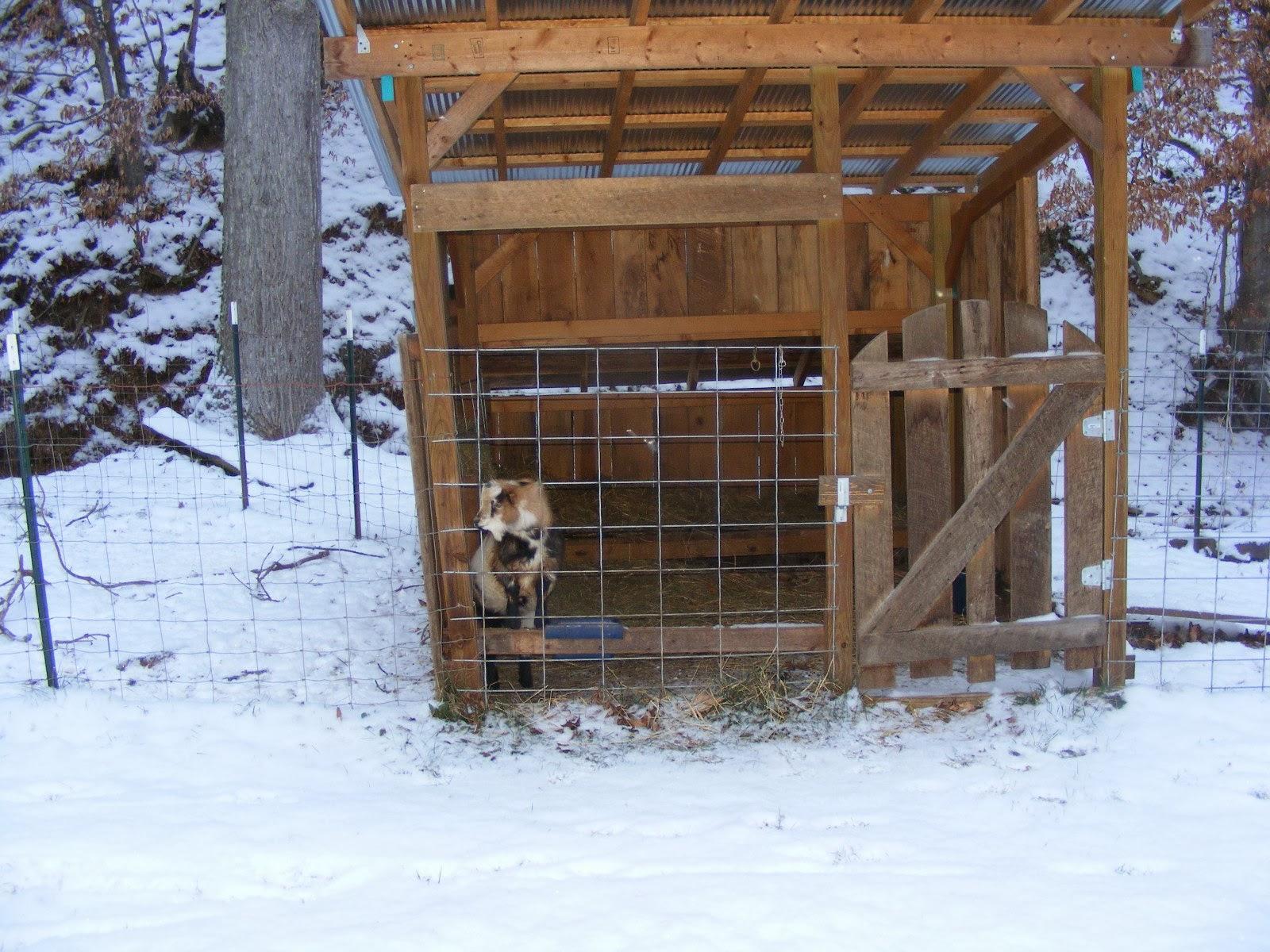 winter goat shelter