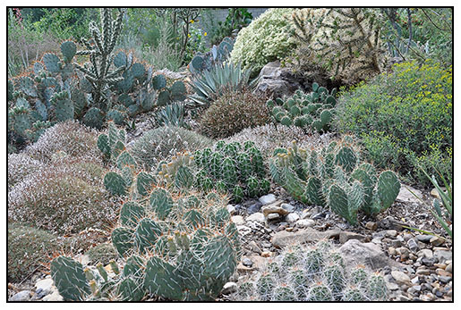 Acantholimon And Cacti Can Make Even A Bone Dry Garden Interesting.