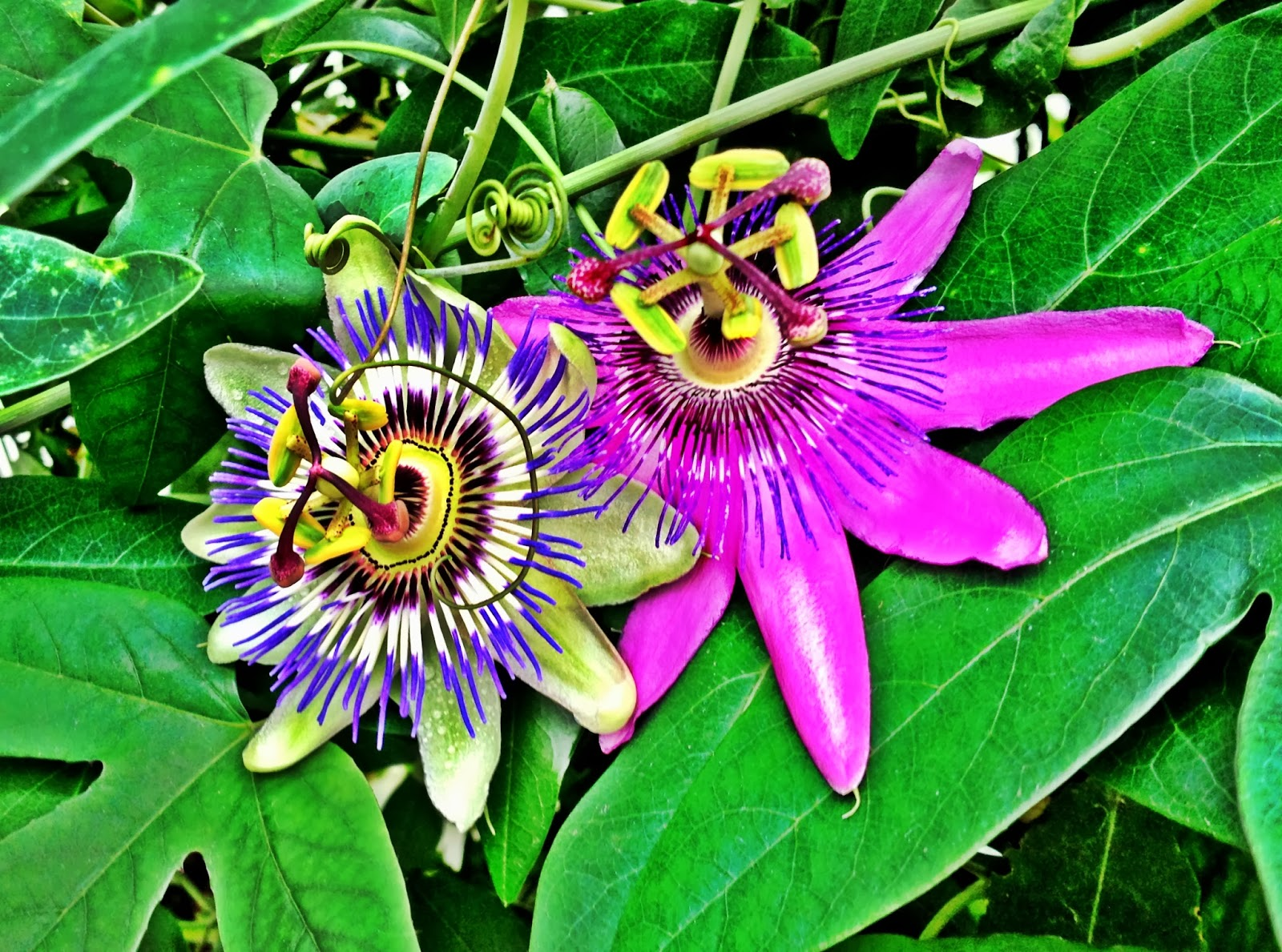 Passion fruit flower photo AS SEEN ON ME Street Style ASOS