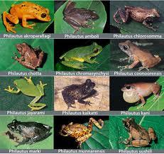 species+katak+india