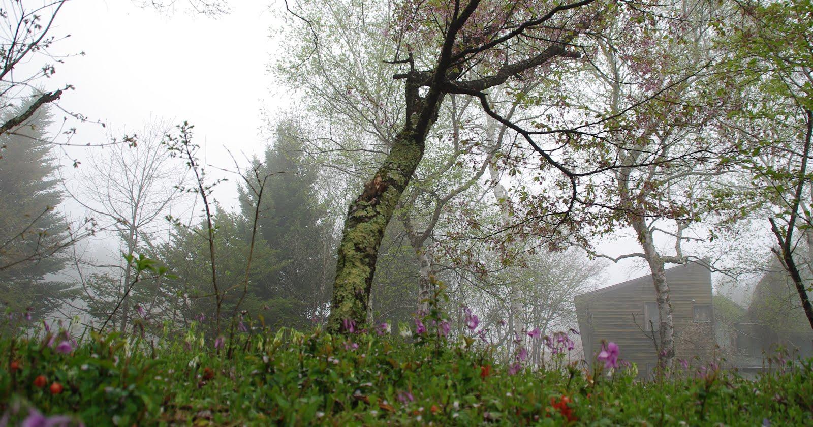 霧の中で咲く早春の花