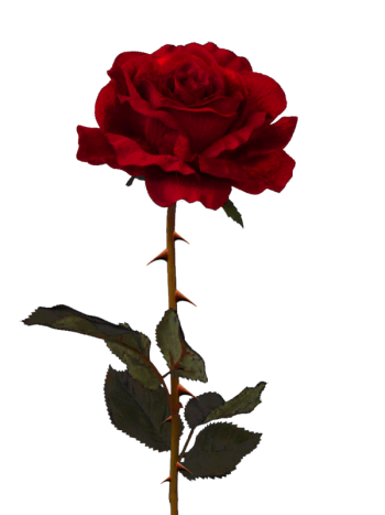 Rosa vermelha 5 png