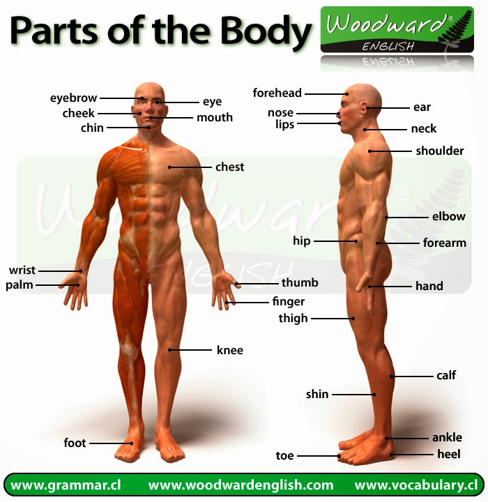 In English Please Naming Body Parts In English Activity