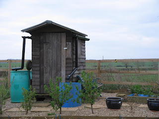 Shed and fruit bushes.