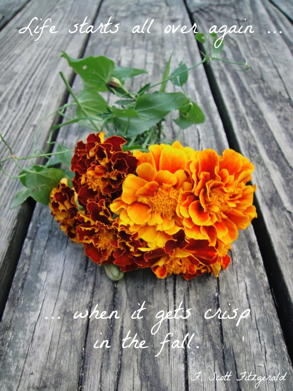 Things to do in the fall - Fall Quote by F.Scott Fitzgerald