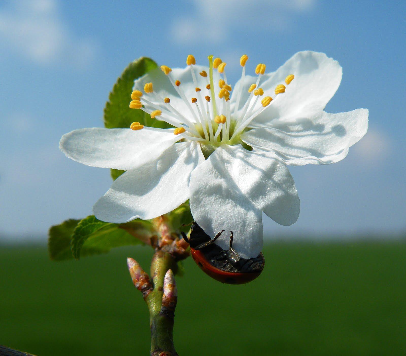 Virágzás.