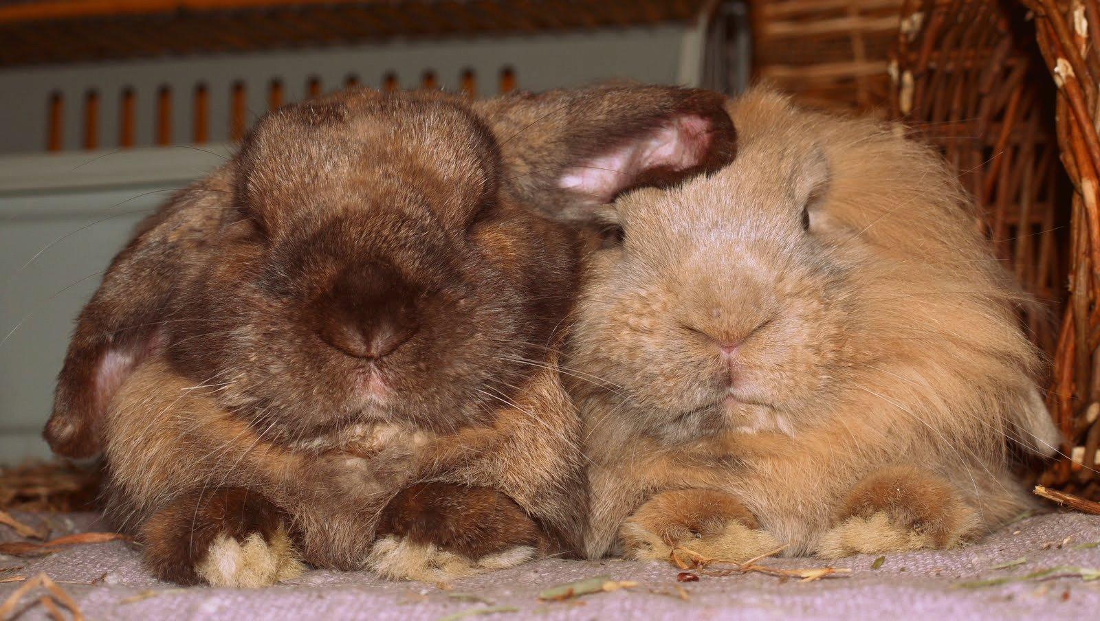 Aventures de lapins maison de toilette for Aventures de maison