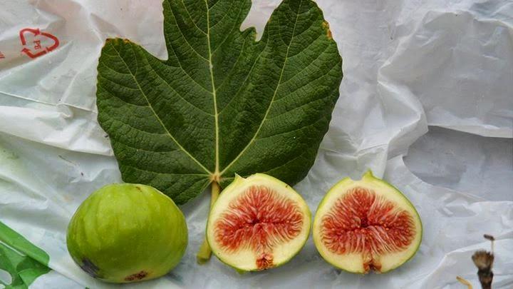 Guadix Figs