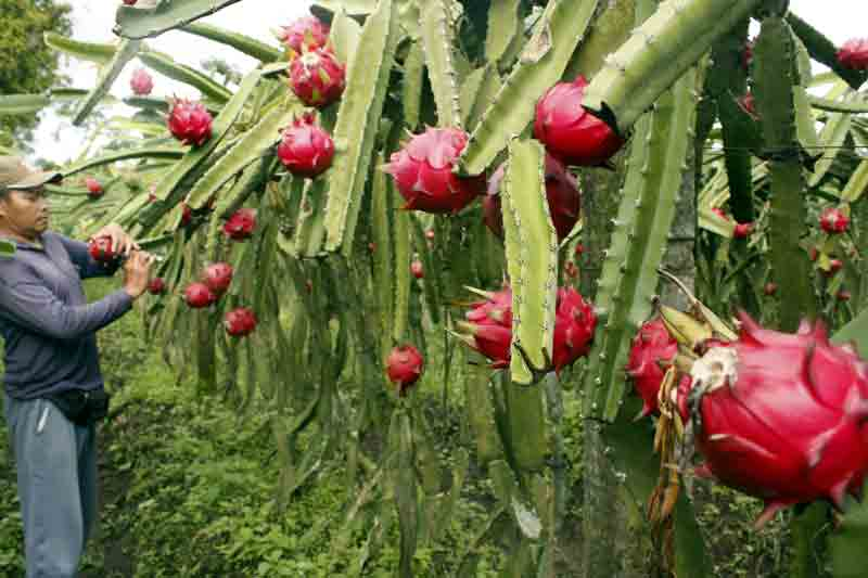 healthy fruits and vegetables for diabetics passion fruit flower