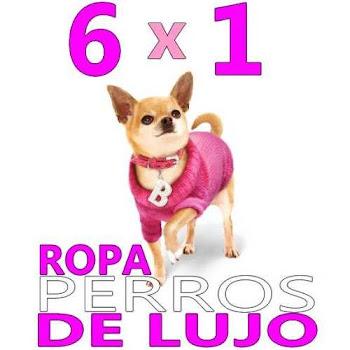 PACK ROPA DE PERRO DE LUJO 6 X 1