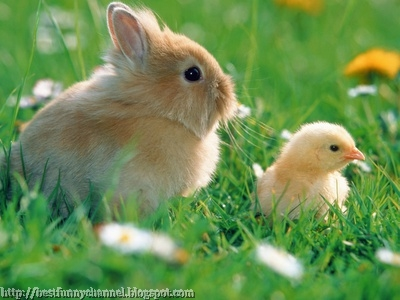 Rabbit and chicken on grass