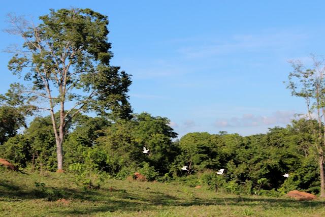 O cerradão tem fisionomia de floresta  com  árvores mais altas e copa mais fechada.