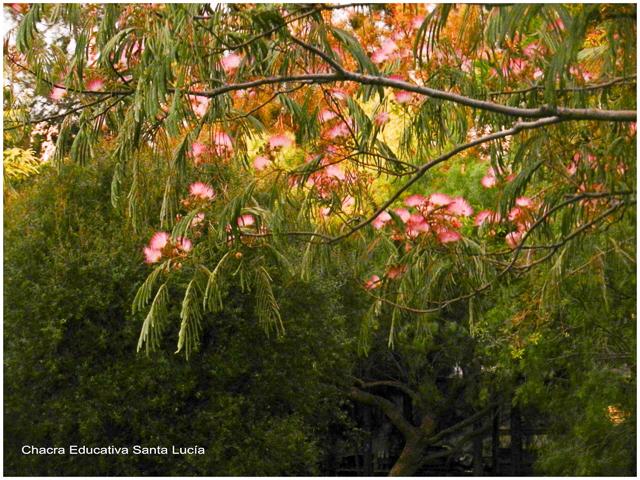 Primavera - Chacra Educativa Santa Lucía