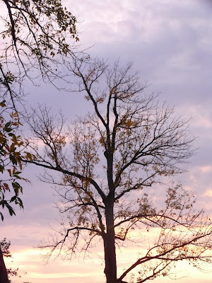 dawn sky with tree