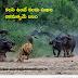 Telugu Quotes Best Leadership Quotes in telugu with images