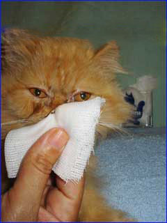 pet shop  Dicas para Cuidar Melhor de seu Gato