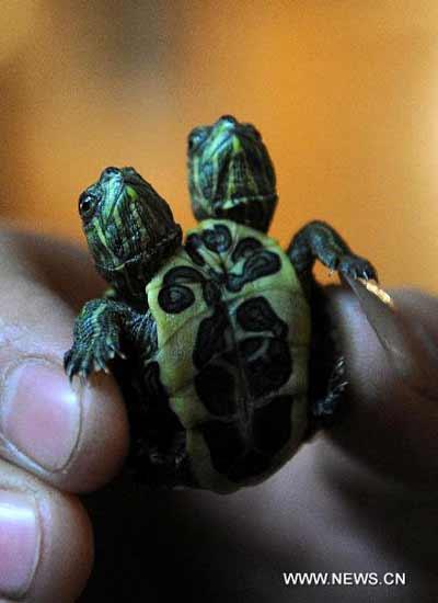 http://2.bp.blogspot.com/-DxX5ssPzjo4/TZh4QyIw85I/AAAAAAAAAVI/nRVlkQnOZCU/s1600/turtle-3.jpg