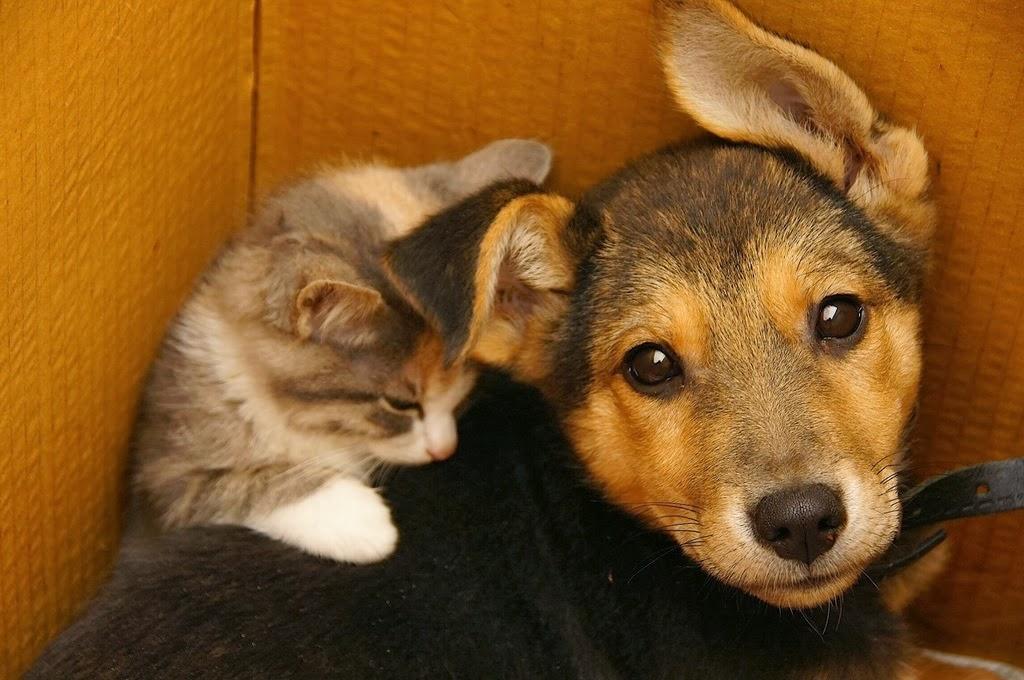 фото котят и щенят