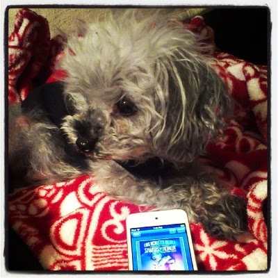 Murchie lays on a fuzzy red blanket with a white pattern. His paws are crossed in front of him and his head is twisted to one side. Near him sits a white iPod with Shards of Honor's cover on its screen. It depicts two people in portrait their features indistinct at this angle.