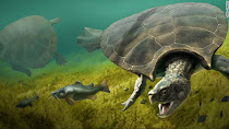 Ανακαλύφθηκαν απολιθώματα γιγάντιας χελώνας του γλυκού νερού με μέγεθος αυτοκινήτου!