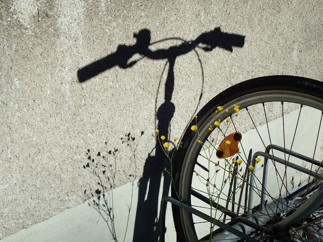 fahrrad,schatten,radfahren,sommer