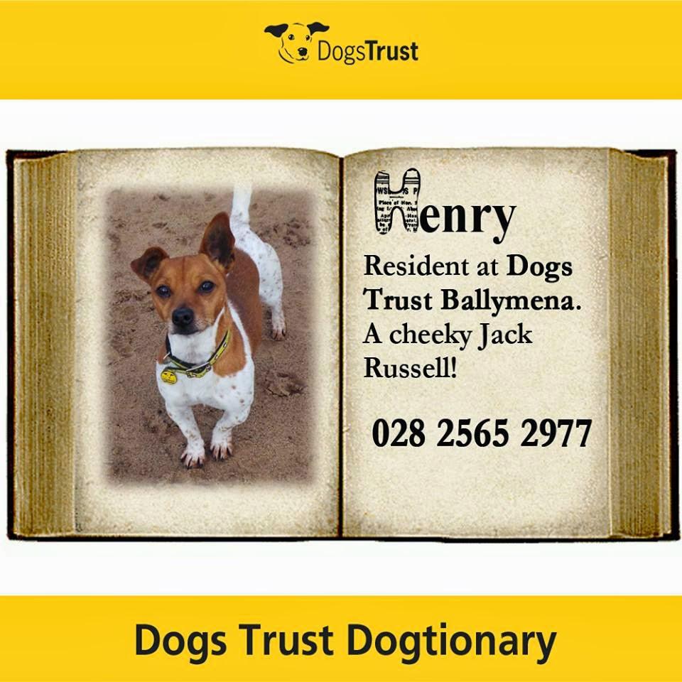 dogs trust dogs trust dog tionary