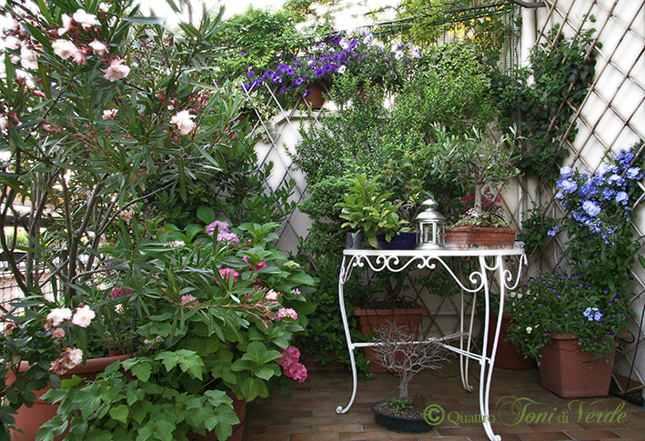 Quattro toni di verde: Un terrazzo fa...