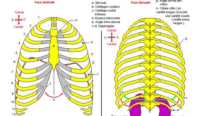 La gymnastique du cou à cervical osteokhondroze
