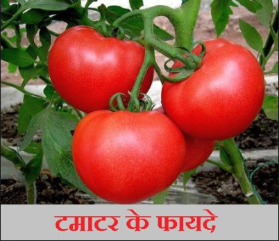 Ayurvedic Qualities of Tomatoes