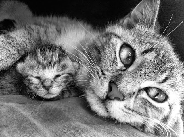 Priceless Pictures Of Cat Mommies
